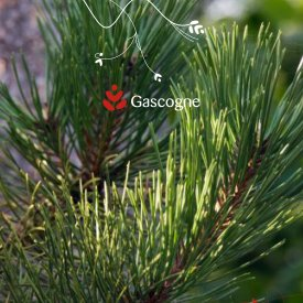Gascogne Group